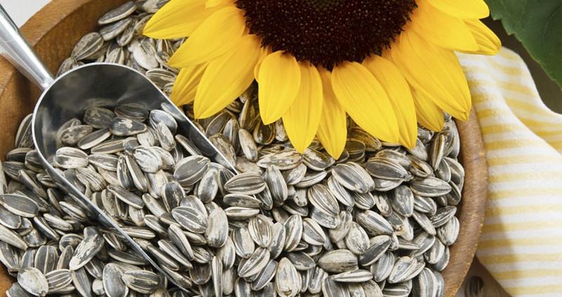 Польза семян подсолнечника